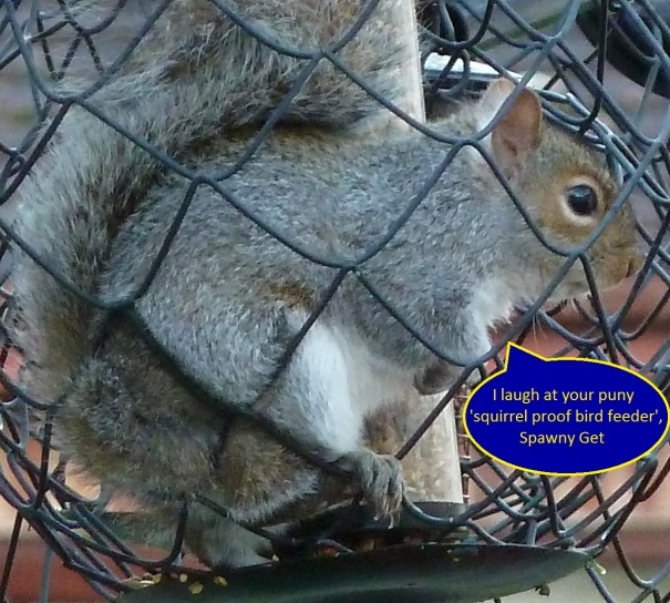 so much for squirrel proof bird feeder