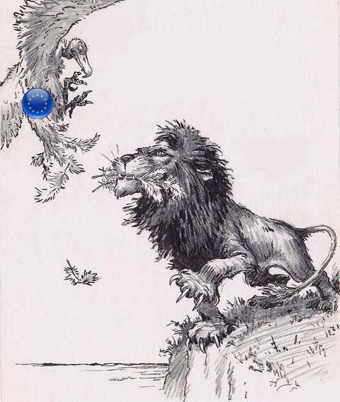 lionshitehawk